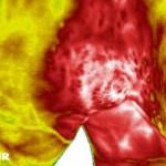 Thermographie Knie Pferd